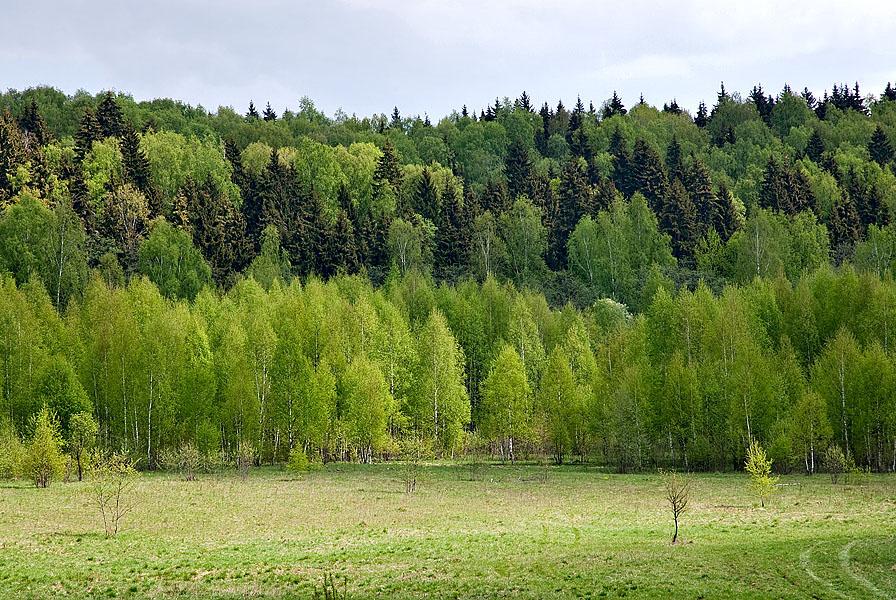 Реферат на тему растительность московской области 3868