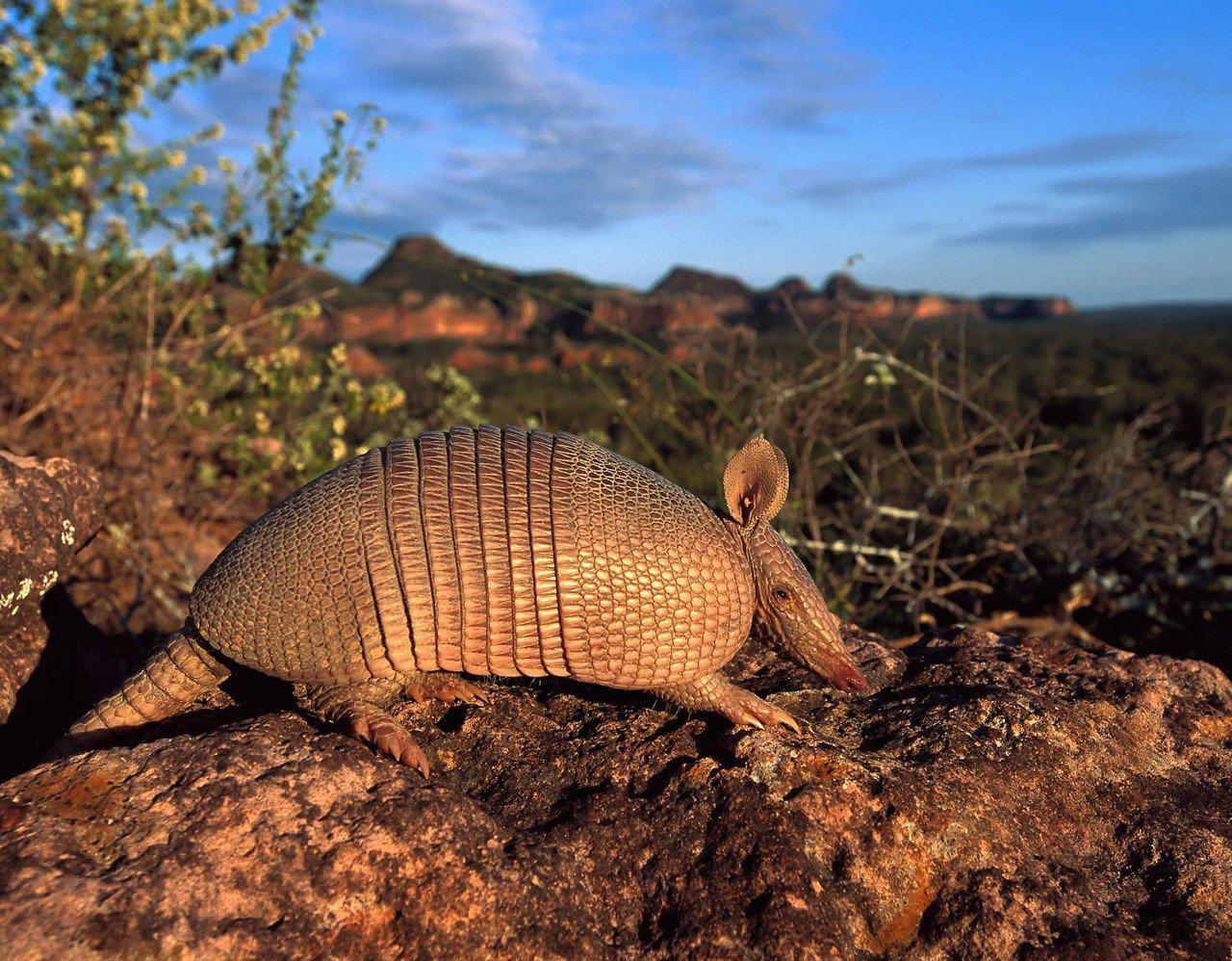 нас фото животных южной америки теплых