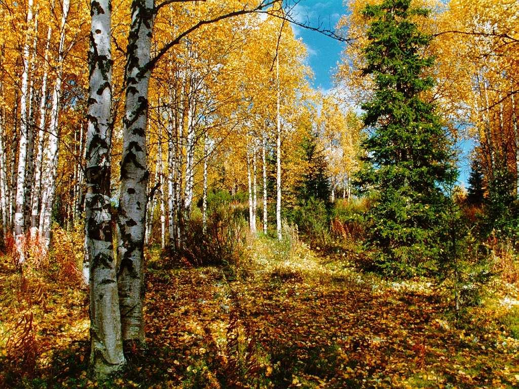 картинка леса осеннего для детей