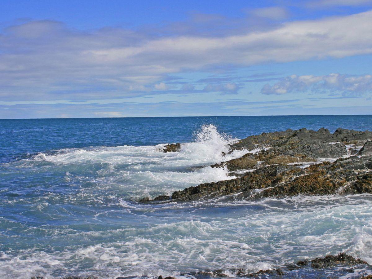 радость моря фото и названия лучше они