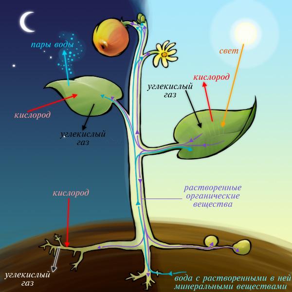 Картинки по запросу фотосинтез