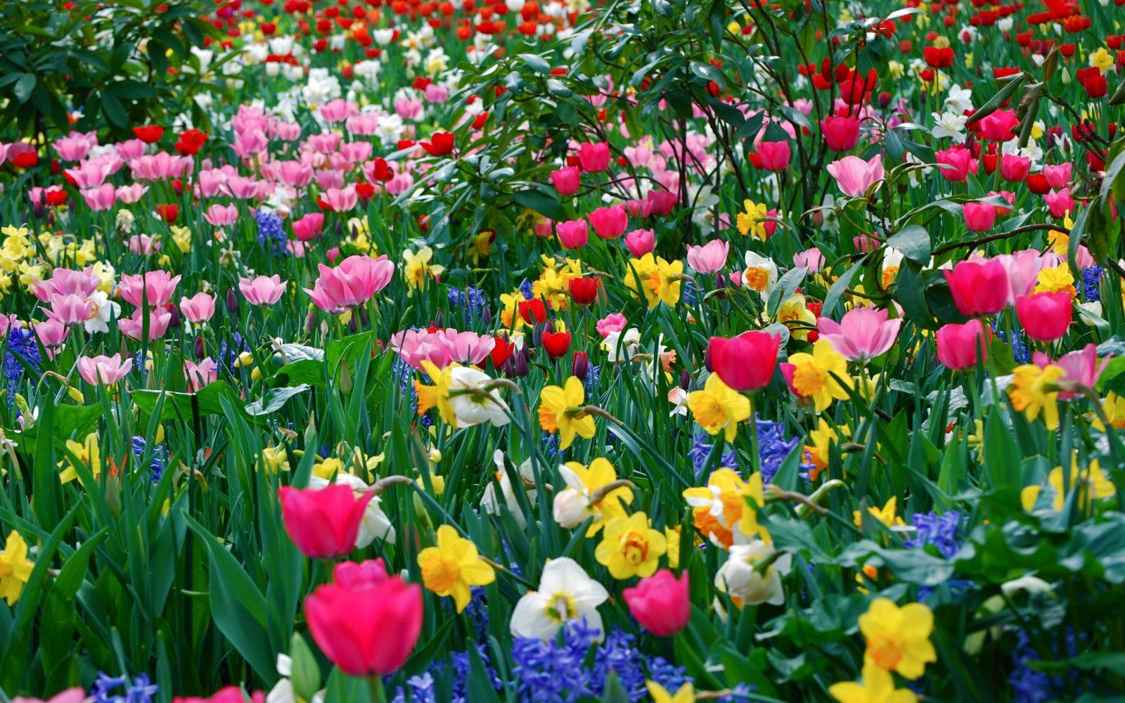 """Сочинение на тему: """"Весенние цветы"""""""