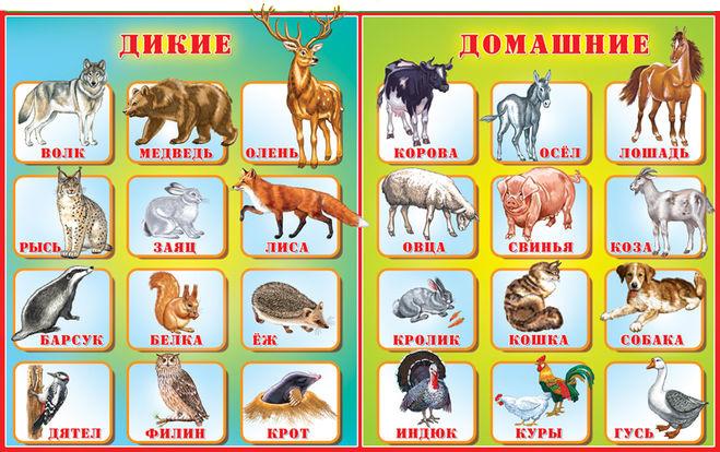 Доклад дикие и домашние животные 9929