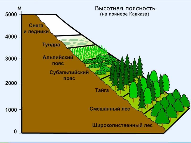 Картинки по запросу природные зоны