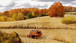 Пословицы и поговорки про осень