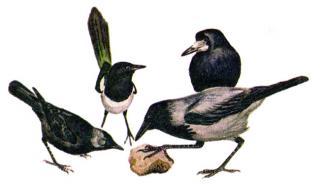 Дружба птиц