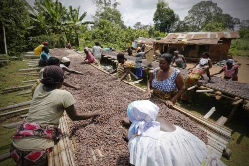 Какие сельскохозяйственные культуры выращивают в африке?
