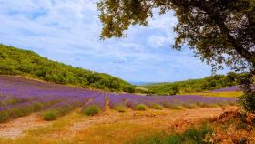 горы и поля Франции