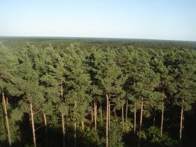 леса Франции