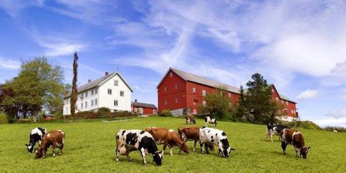 Выращиваемые сельскохозяйственные культуры в норвегии