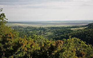 Природа, растения и животные Саратовской области