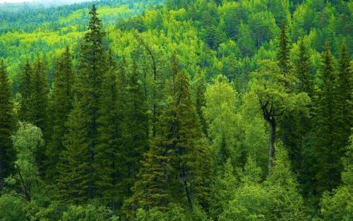 лес южной тайги
