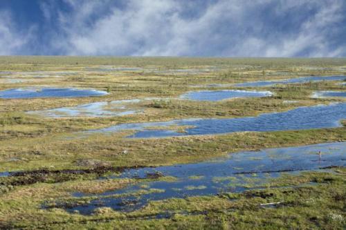 болотистая местность в тундре