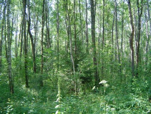смешанные и мелколиственные леса