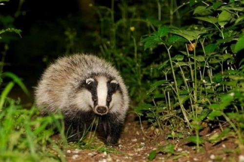 Природа, животные и растения Республики Коми