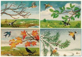 Птицы в разное время года